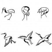 各种形态的丹顶鹤简笔画图片大全