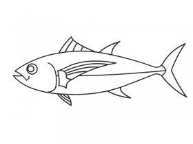 金枪鱼简笔画图片