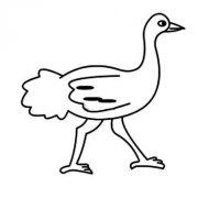 幼儿园站立的鸵鸟简笔画图片