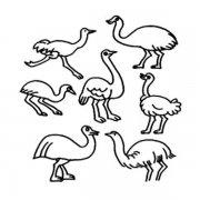 各种形态的鸵鸟简笔画图片大全