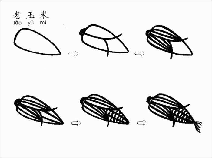 玉米简笔画教程