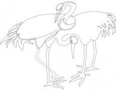 手绘线描丹顶鹤简笔画图片