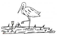 沼泽地里的丹顶鹤简笔画图片