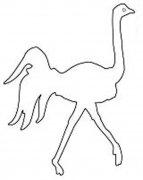 手绘线描鸵鸟轮廓简笔画图片