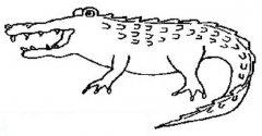 凶恶的大鳄鱼简笔画图片