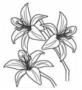 儿童关于花的简笔画:百合花