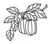 树上的杨桃简笔画图片大全