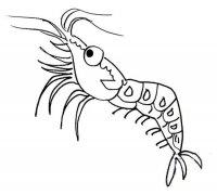 海鲜虾简笔画图片大全