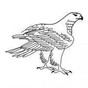 雄鹰简笔画图片