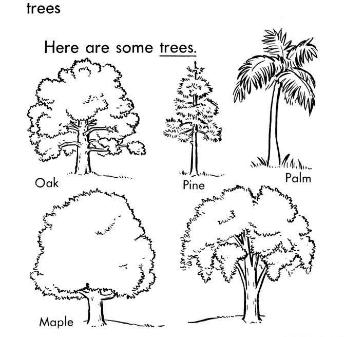 五种大树简笔画图片