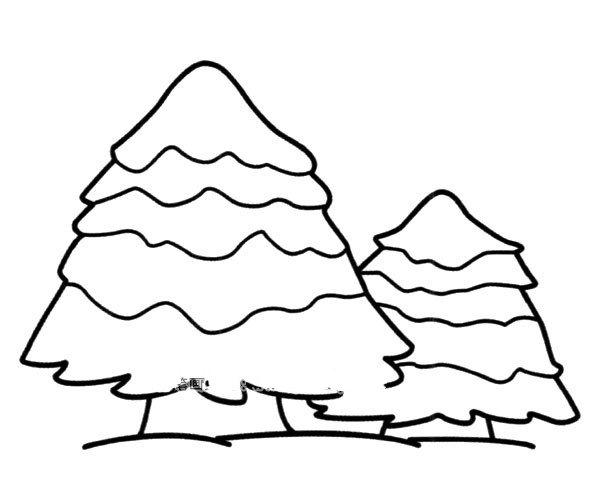 雪地里的松树