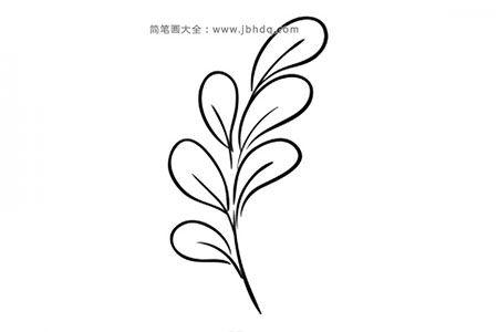 一组漂亮的叶子简笔画图片