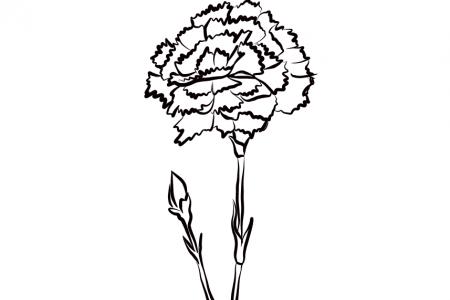 怎么画康乃馨