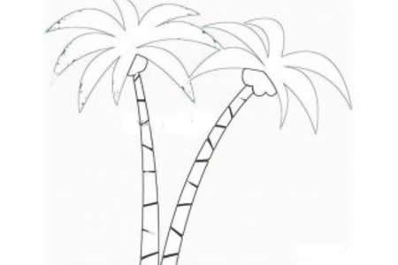 两颗椰子树