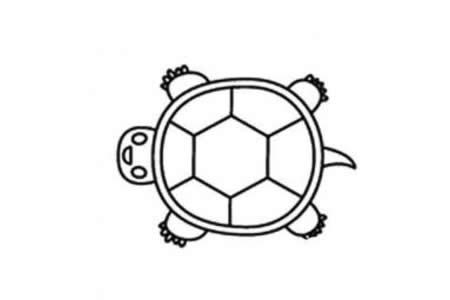幼儿乌龟的简笔画画法