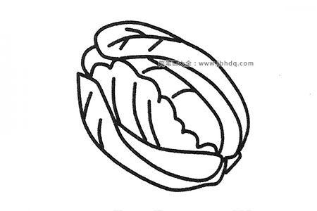 6张关于白菜的简笔画图片