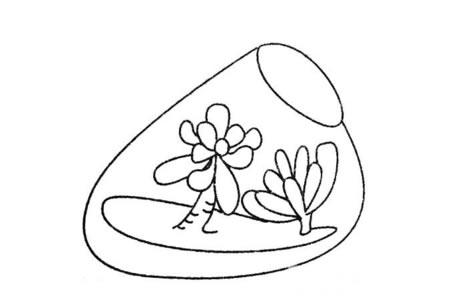 漂亮的多肉植物盆景简笔画图片