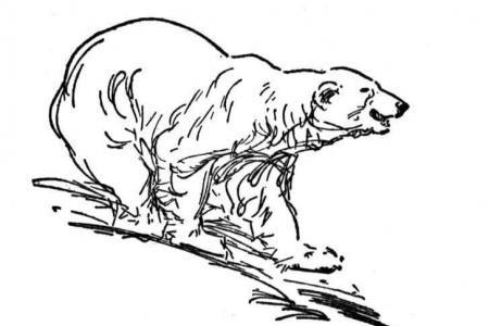 饥饿的北极熊