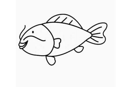 鲤鱼怎么画