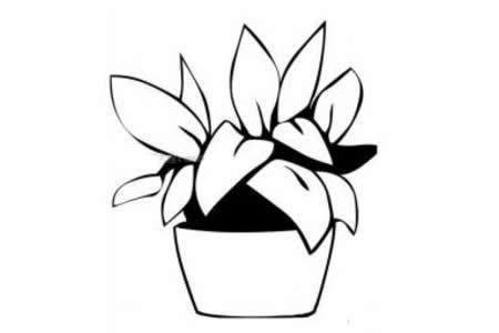 花盆和花简笔画