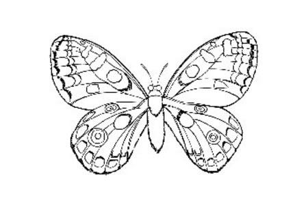 漂亮的蝴蝶怎么画
