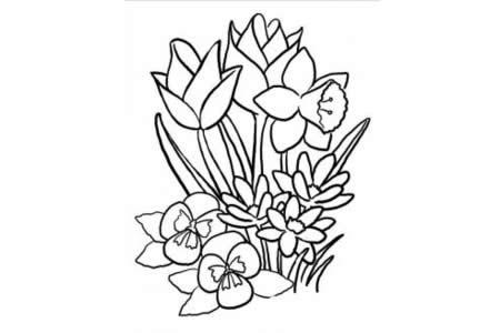 水仙花简笔画图片 花朵简笔画