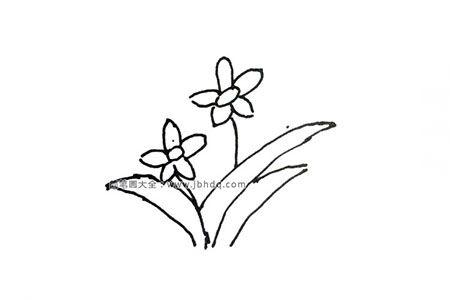 柬埔寨国花:水仙
