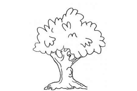茂密的大树