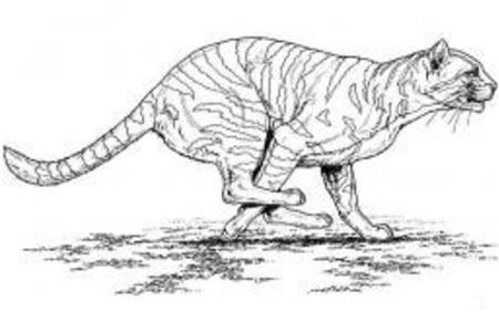 奔跑的老虎
