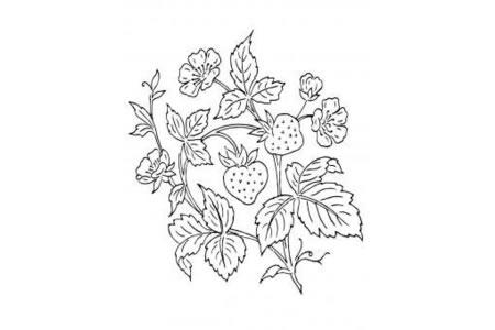 草莓和草莓花