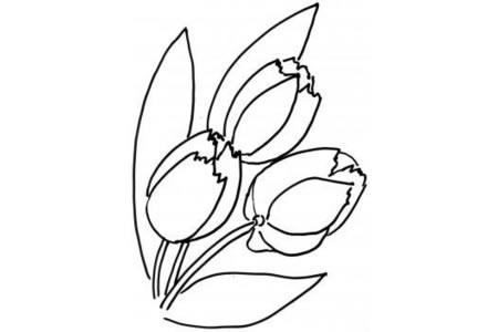 花朵简笔画 郁金香简笔画大全