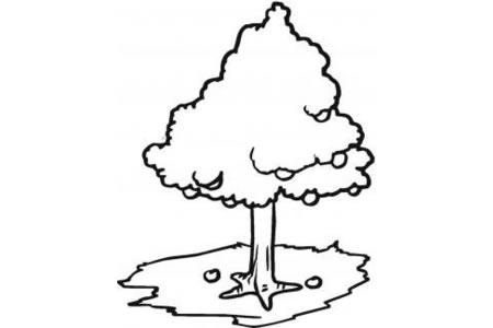 简笔画苹果树的画法