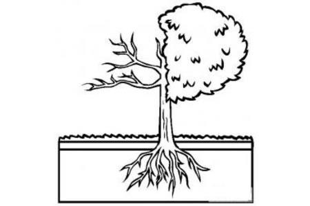 树的解剖简笔画图片