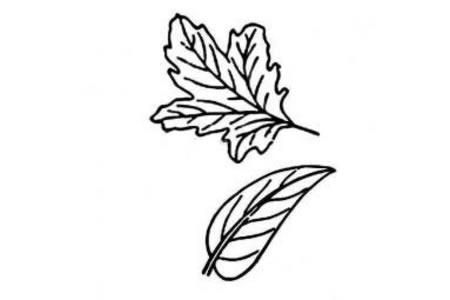 几张树叶的简笔画图片