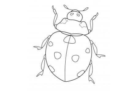 忙碌的瓢虫