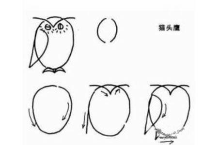 幼儿简笔画教程 猫头鹰