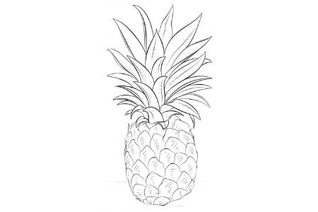 简单易学的菠萝简笔画