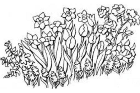 花园里漂亮的花朵