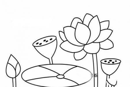 漂亮的莲蓬荷叶荷花简笔画图片