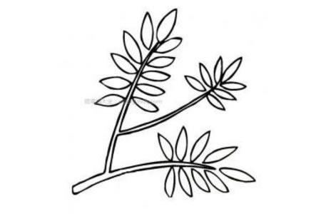 漂亮的槐树树叶简笔画