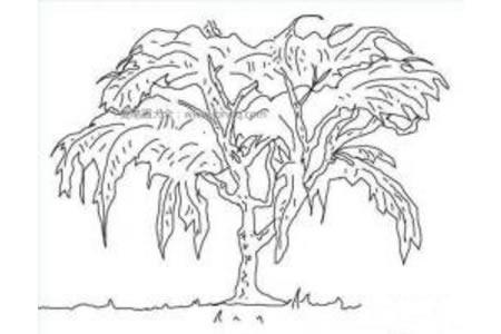 大榕树简笔画图片