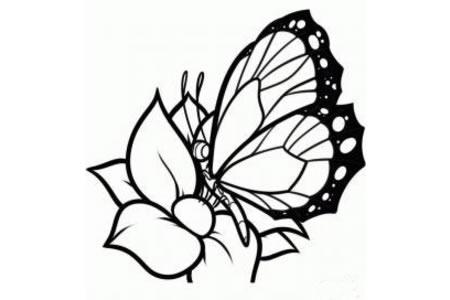 蝴蝶停在花朵上