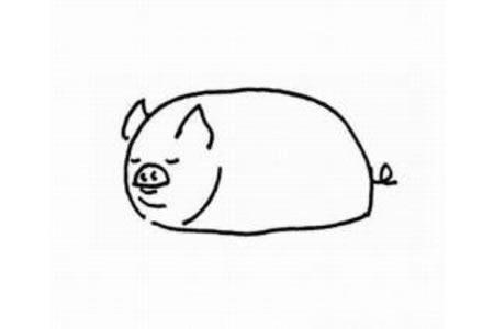 幼儿简笔画动物 小猪