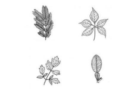 多种树叶简笔画