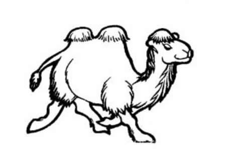 动物简笔画 骆驼简笔画大全
