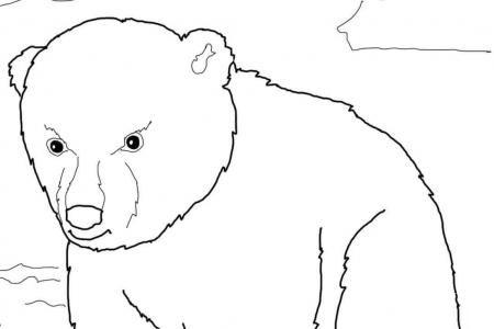 可爱的北极熊幼崽