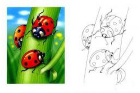 瓢虫的画法