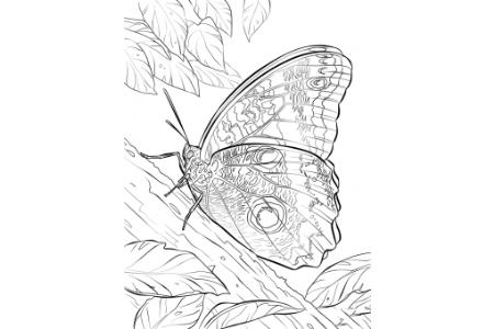美丽的蝴蝶标本