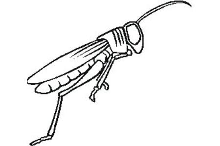 蚱蜢的简单画法