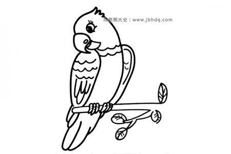 树枝上的鹦鹉